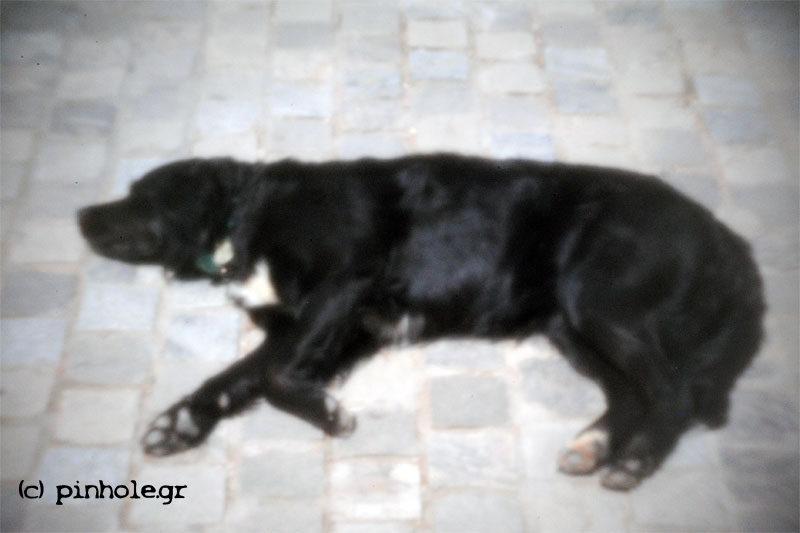 The Black_Dog (071)