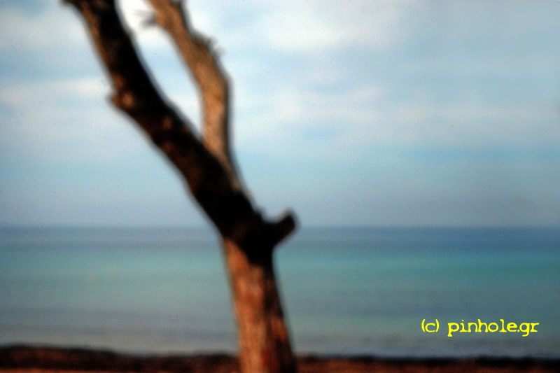 Tree in front of the sea (114)