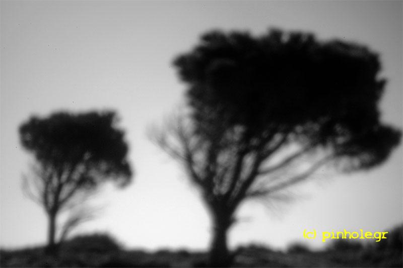 Pines (122)