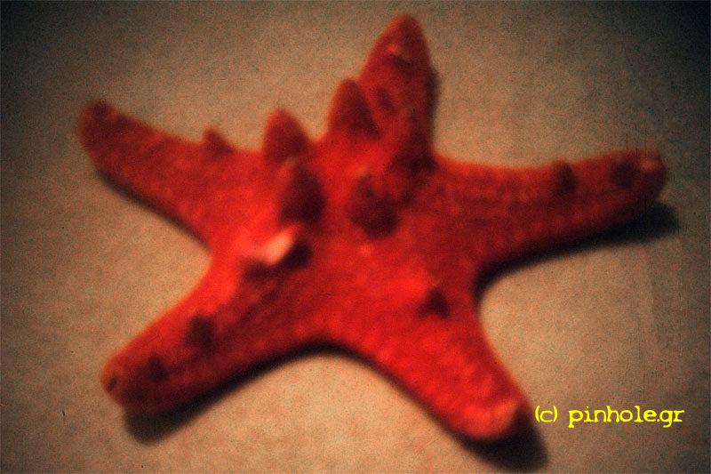 Starfish (157)
