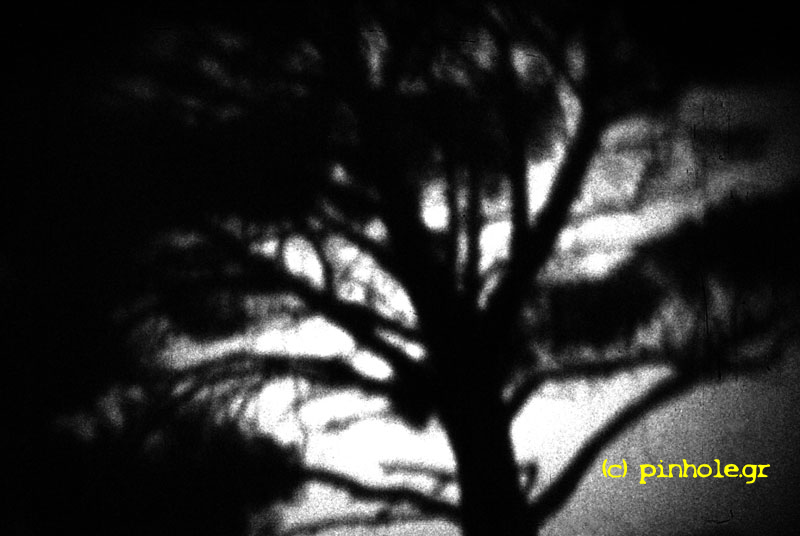 Pine (169)