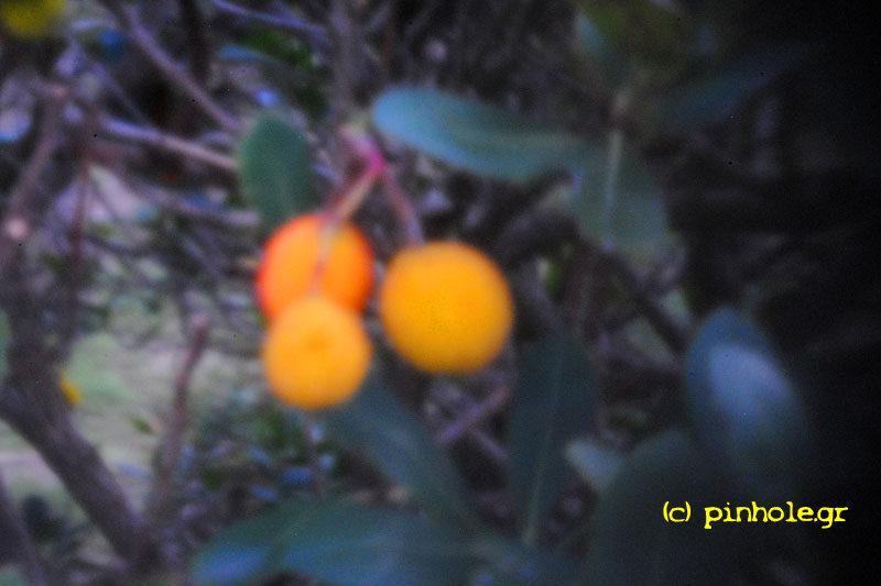 Cranberry (175)
