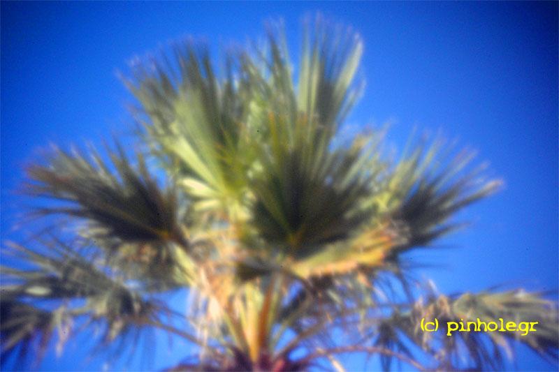 Palm tree (220)