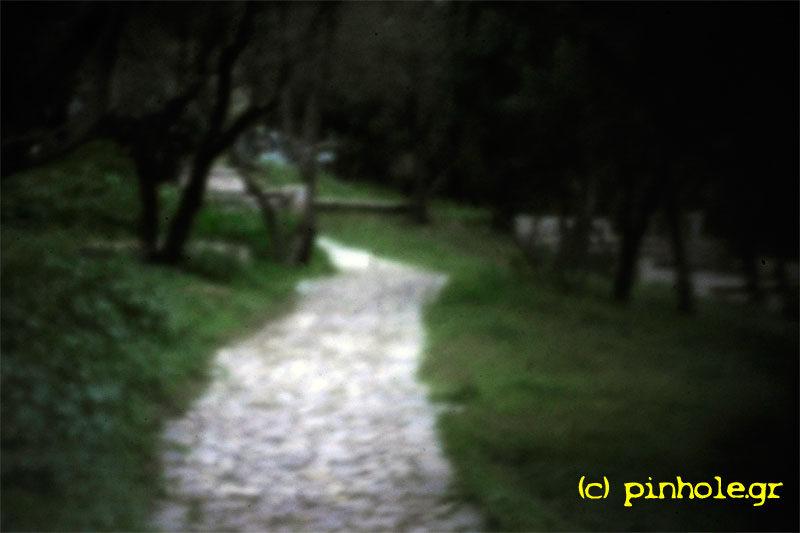 Pathway (278)