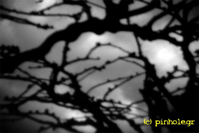 Black branches (286)