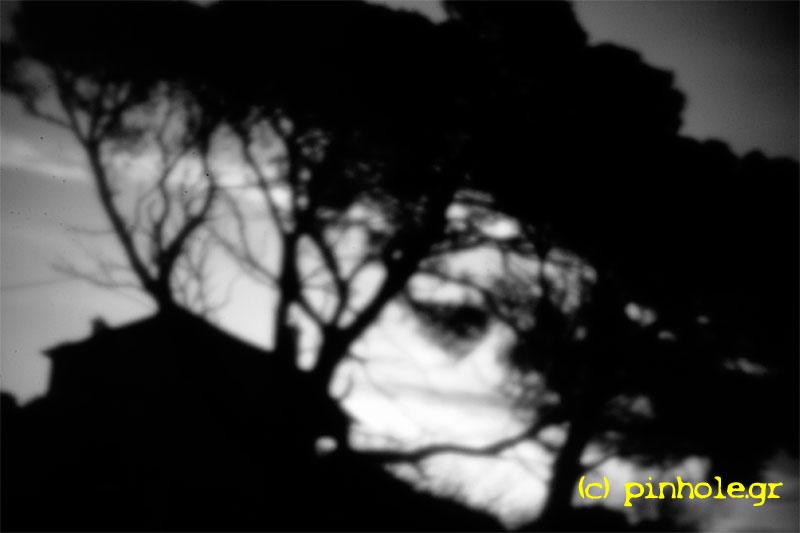 Black trees (288)