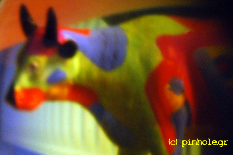 Cow Parede (316)