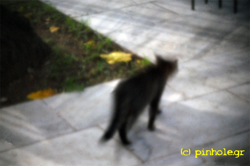 The Gray Cat (335)